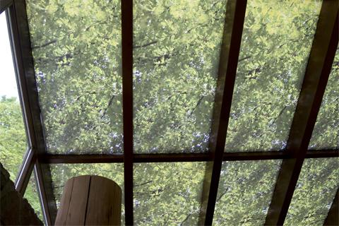 Decke mit Baummotiv in der Ausstellung Wildnis(t)räume in Vogelsang-Eifel