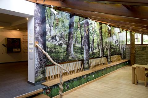 Waldmotiv-Rückwände in der Ausstellung Wildnis(t)räume in Vogelsang