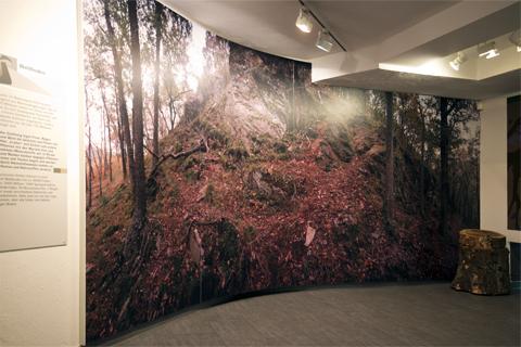 Rückwand mit Baummotiv in der Aussetllung Wildnis(t)räume in Vogelsang-Eifel